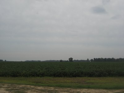 More Cotton Fields