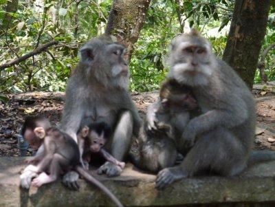 Hey_hey_we..monkeys.jpg