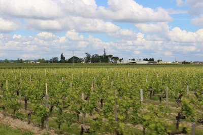 St Emilion - Vineyards