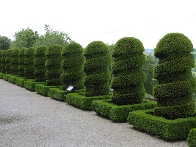 Chateau de Hautefort - Hedge row