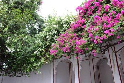 Flowering trees at Sahelion ke Bari