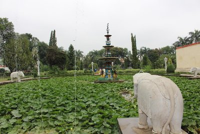 Lotus garden at Sahelion ke Bari