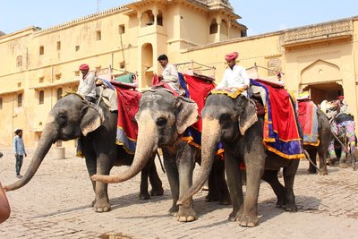 Jaipur - Elephants