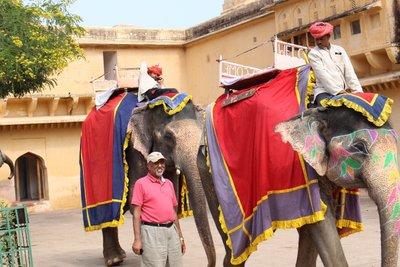 Jaipur - Prem elephant
