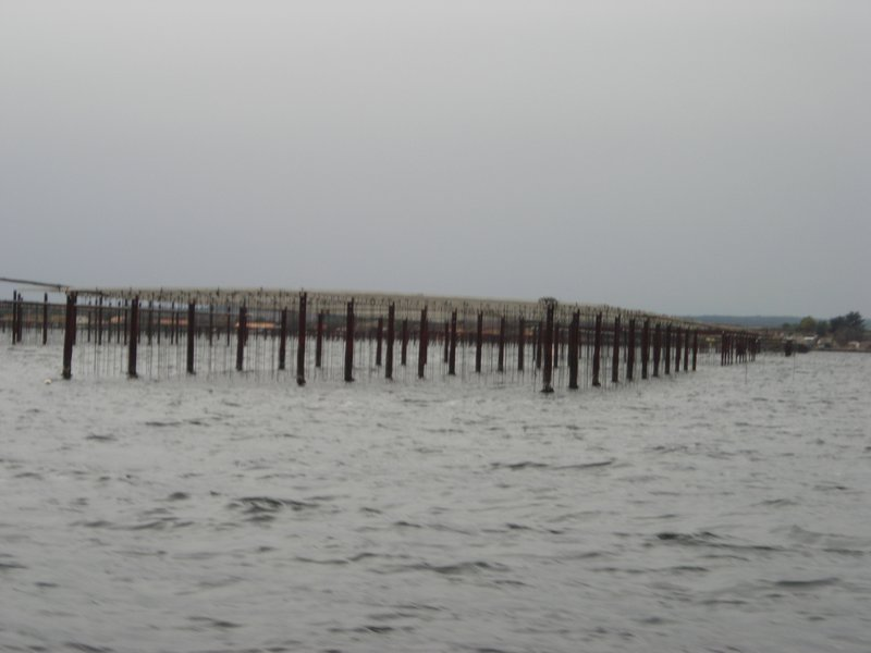 Hundreds of oyster beds in front of Mze