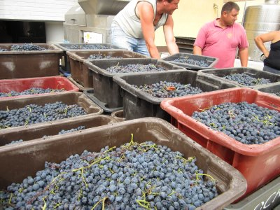 Grapes just in