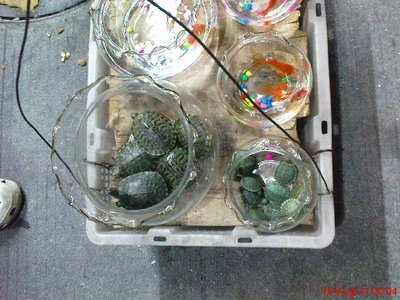 Terrapins for sale!