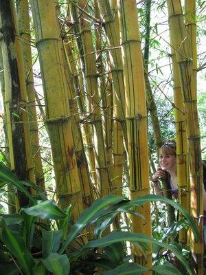 Tone midt i bambusskogen