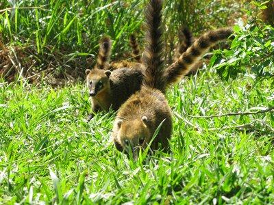 Et eller annet dyr som vi trodde het Possom. men det fikk vi avkreftet. Noe mer vet vi ikke.