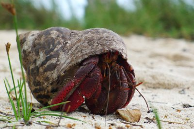 En liten krabbelure på tur med huset sitt