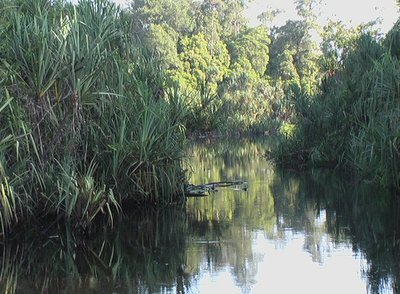 The blackwaters of Sg Bebar