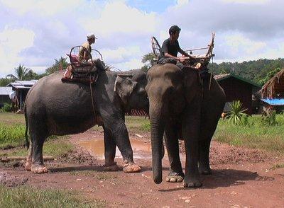 The Jumbo ride to the sacred Phu Asa