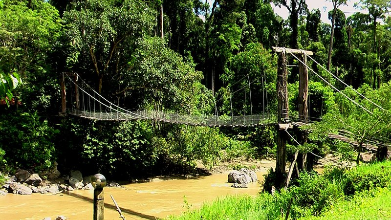 ROPE BRIDGE OF DANUM VALLEY