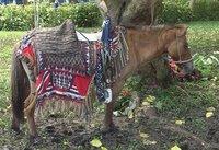 HORSE IN TBOLI SPLENDOUR