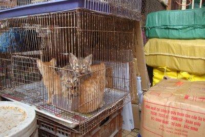 Hanoi_031.jpg