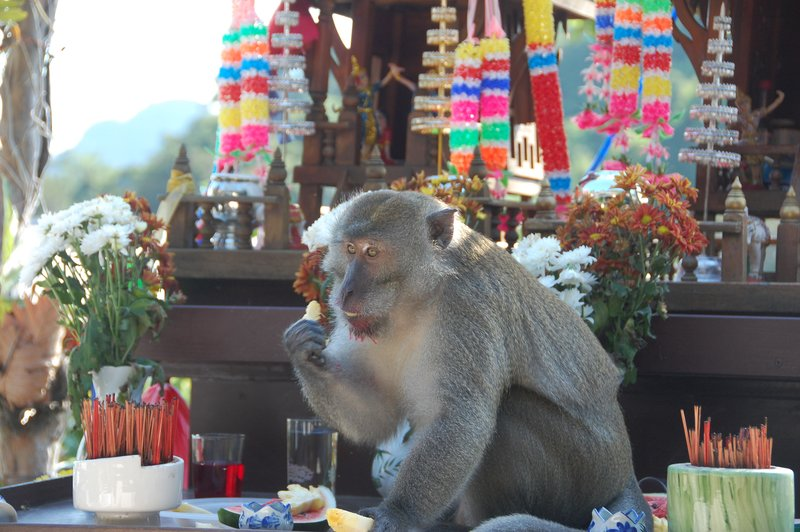 A monkey taking a blessing