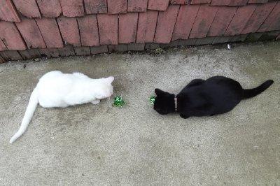 Chat noir, chat blanc!