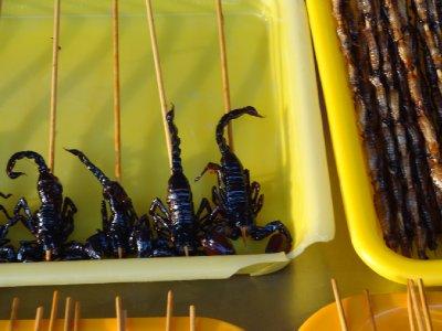 Scorpions ?