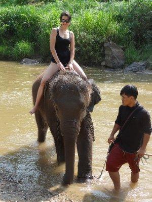 Baignade avec les éléphants