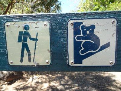 Balade avec les Koalas