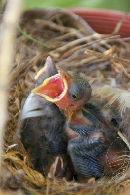 Nous avons trouvé des p'tits oiseaus dans le jardin de l'auberge