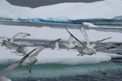 Stern Antarctique - Wilhelmina bay