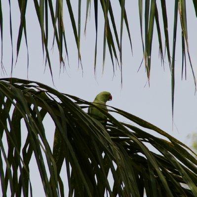 Notre premier perroquet :)