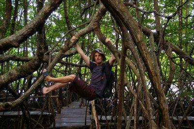 Une nouvelle espèce de singe découverte dans la Mangrove