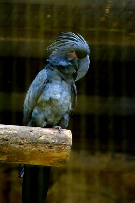 Bird Park - Singapour