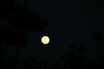 Ce soir c'est pleine lune! Dans l'hémisphère sud il y a un lapin sur la lune :) qui le voit?!