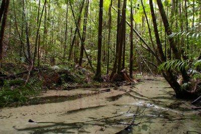 Foret et cours d'eau dans la foret de Fraser Island
