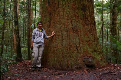 Fiona devant un des arbre de Fraser Island