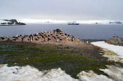 Colonie de pingouin sur barrientos island. Notre bateau en arrière plan