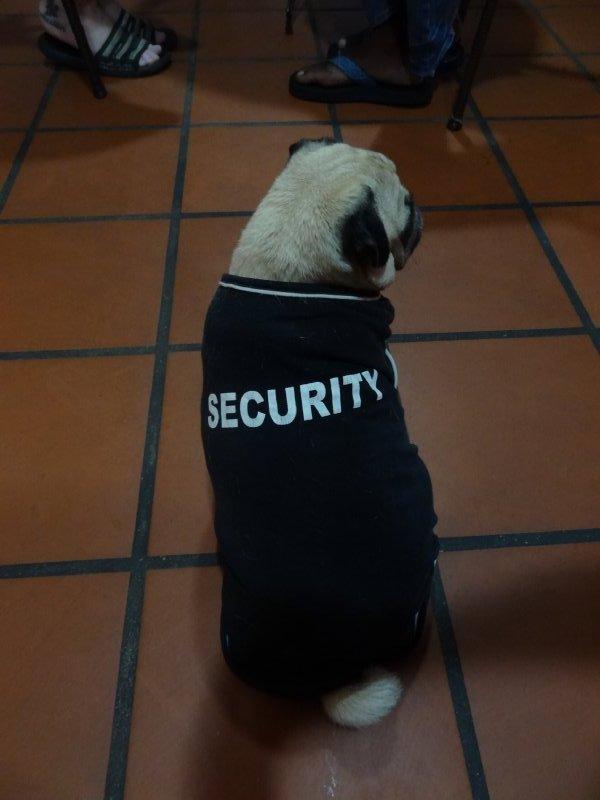 Le chien de la sécurité de l'hôtel