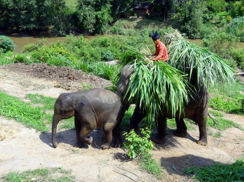 Famille d'éléphants