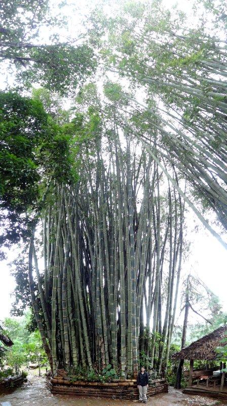 Vous avez déjà bu de bambous aussi grands? Regardez Fiona est en bas...