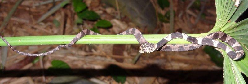 Petit serpent