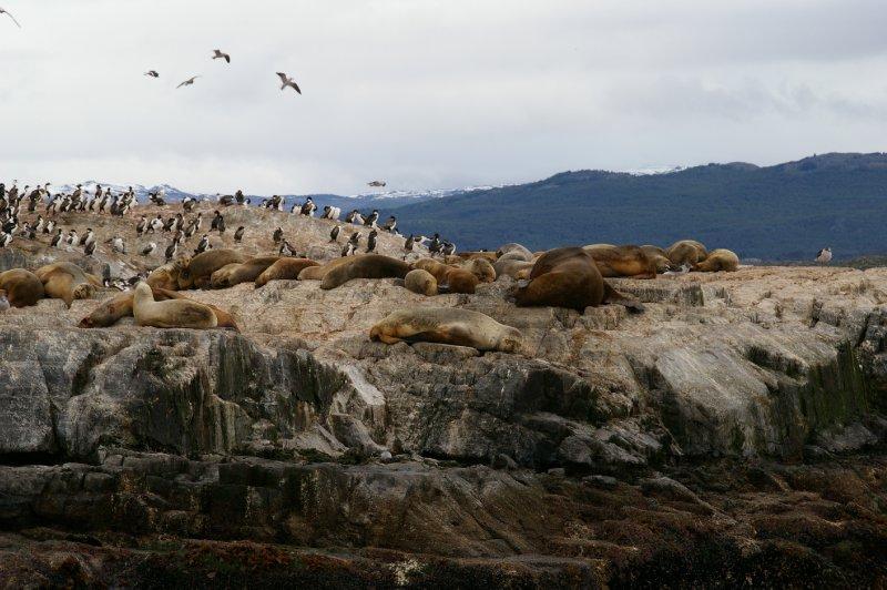 Colonie de lions de mer