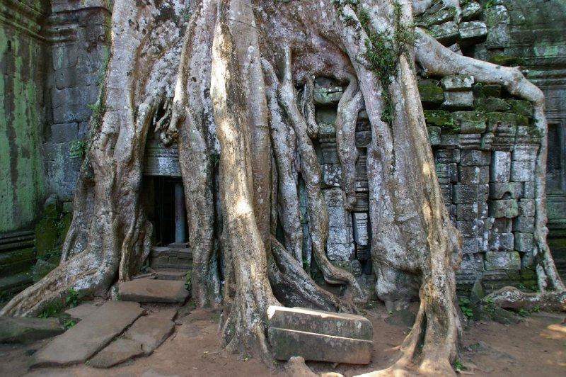 Wat Ta Prohm - Angkor