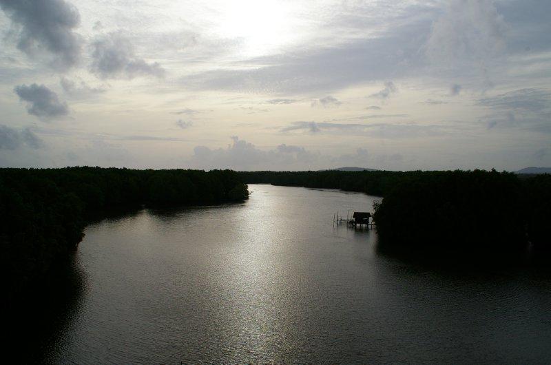 Vue sur la mangrove