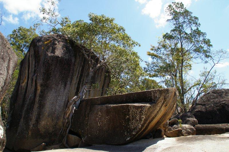 L'arbre a cassé le rocher en deux!