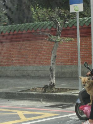 Dogs ride scooters too!