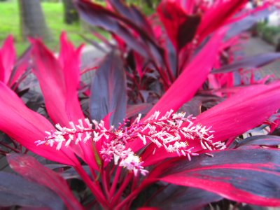 Such strange, delightful plants in the subtropical climate of Taiwan