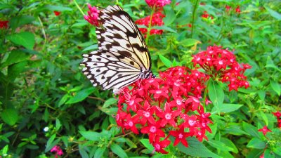 My sister Winnie has a supreme fear of butterflies... I think we all should learn to conqure our fears.