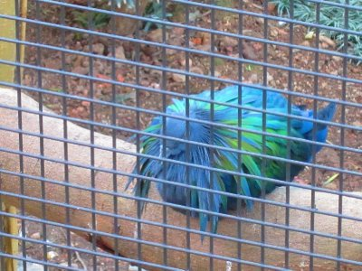 There was an aviary in Kowloon Park!  What a delightful discovery.  This guy was wearing a dashing scarf - Ich wants!