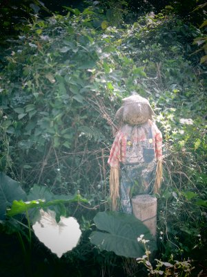 A miniature scarecrow.  The size of a child.