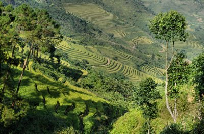 Rice terraces in NE Vietnam