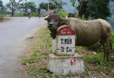A buffalo marks the route!
