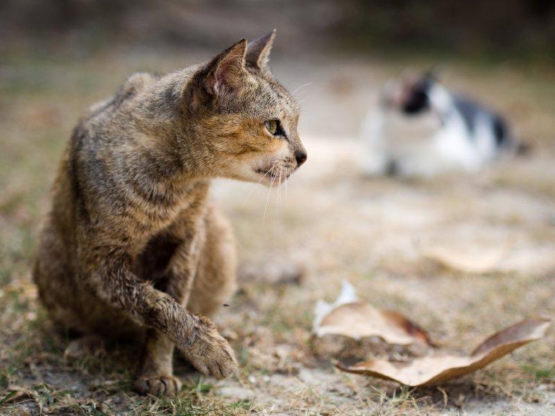 Cats on Koh Yao Noi