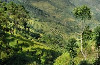 20120930_Rice_terraces
